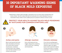 visual on black mold exposure infographic