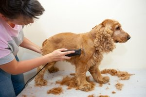 How to Start a Pet Care Business