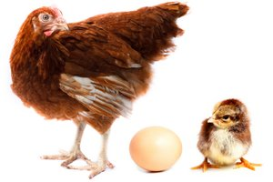 organic foods, poultry