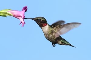 What Google's Hummingbird Update Means for Small Business