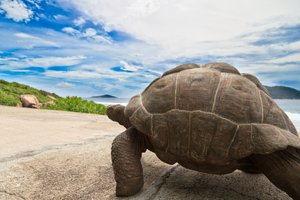 Slow and Steady Wins the Startup Race