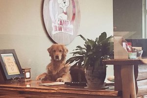 Camp Bow Wow office envy