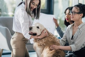 Paw-some or Cat-astrophic? Pros and Cons of Office Pets