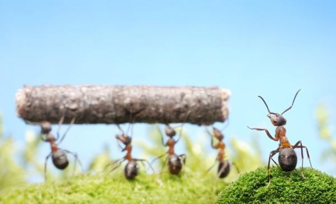 What Human Workers Can Learn From Ants