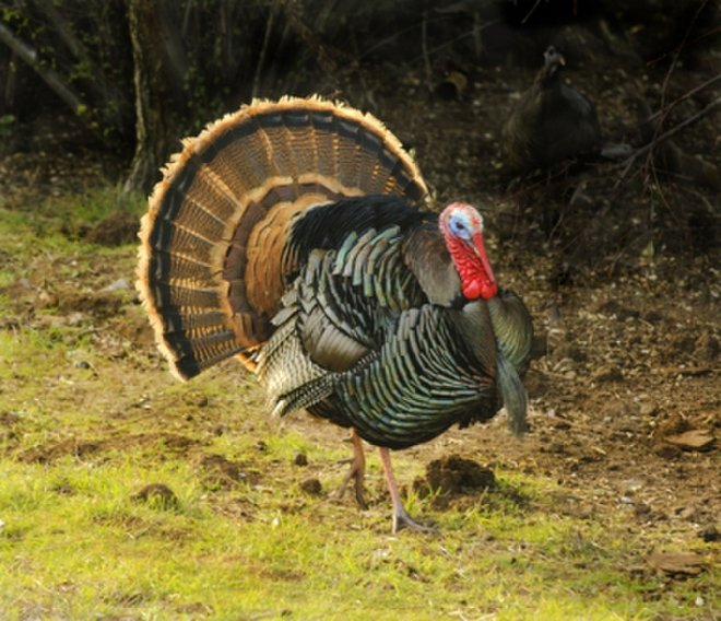 Long Thanksgiving weekend remains a U.S. tradition, but some must work