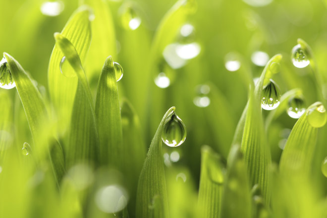 """One-fifth of Earth Day celebrants may be """"faux greens."""""""