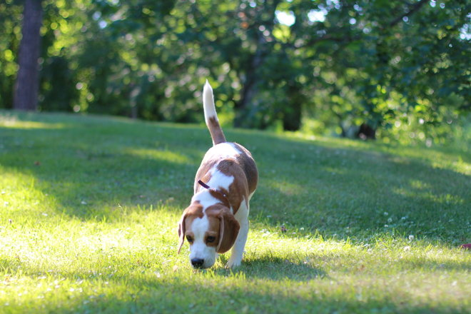 The Scent of the Hunt: How We Help B2B Professionals Sniff Out Sales